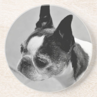 Boston Terrier Black and White Coaster