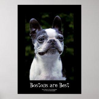 Boston Terrier, Black Border Text Poster