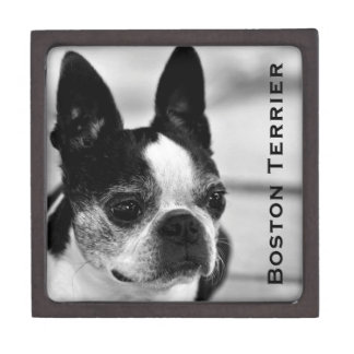 Boston Terrier blanco y negro Cajas De Recuerdo De Calidad