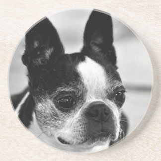 Boston Terrier blanco y negro Posavasos Diseño