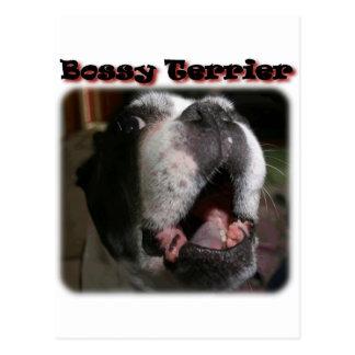Boston Terrier:  Bossy Terrier Postcard