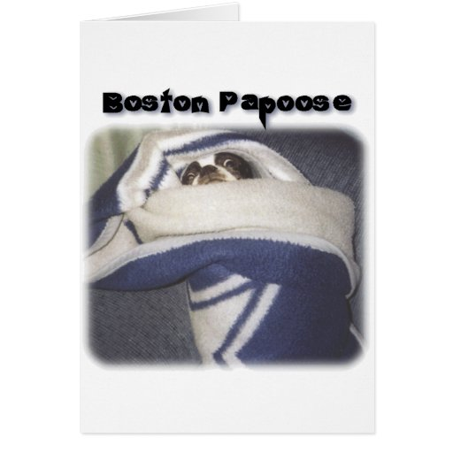 Boston Terrier:  Boston Papoose Tarjeta De Felicitación