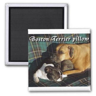 Boston Terrier:  Boston Terrier Pillow Magnet