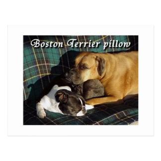 Boston Terrier:  Boston Terrier Pillow Postcard