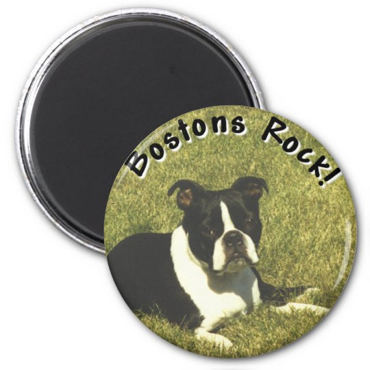 Boston Terrier:  Bostons Rock Magnet