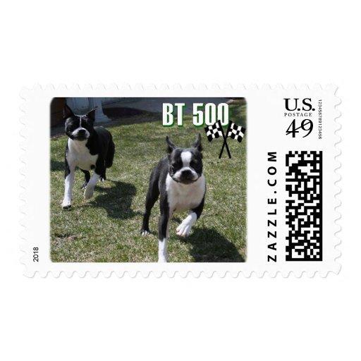 Boston Terrier:  BT 500 Postage Stamps