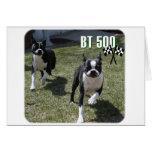 Boston Terrier:  BT 500 Tarjeta