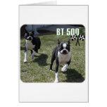 Boston Terrier:  BT 500 Tarjetas
