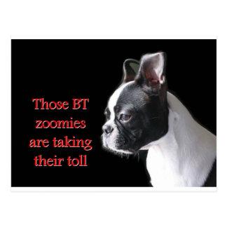 Boston Terrier:  BT zoomies taking toll Postcard