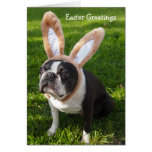 Boston Terrier Bunny Easter Greeting Card 2