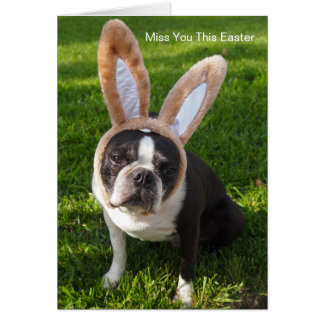 Boston Terrier Bunny Greeting Card
