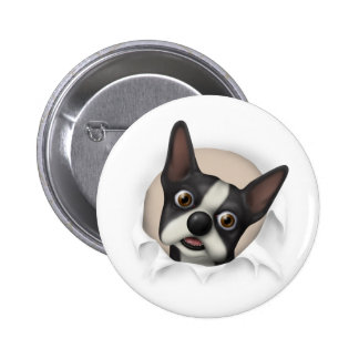 Boston Terrier Busting Out Button