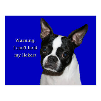 Boston Terrier:  Can't hold her licker Postcard