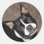 Boston Terrier:  Cara brillante Etiqueta Redonda