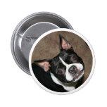 Boston Terrier:  Cara brillante Pins