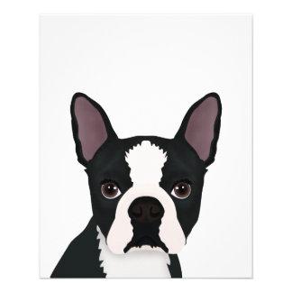 "boston terrier cartoon 4.5"" x 5.6"" flyer"