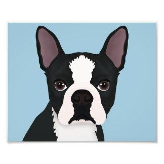 boston terrier cartoon photo print