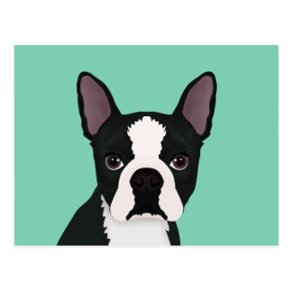 boston terrier cartoon postcard