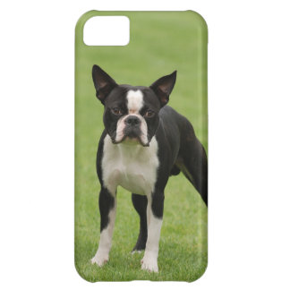 Boston terrier iPhone 5C covers