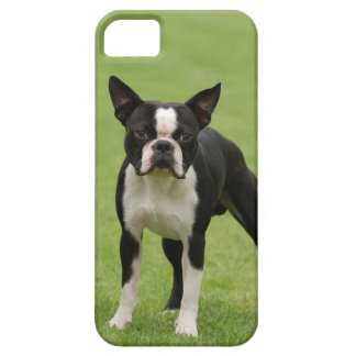 Boston terrier iPhone 5 cover