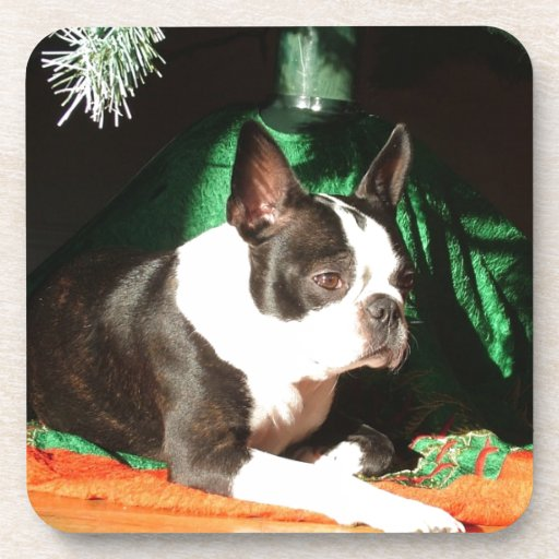 Boston Terrier Christmas with Piper Beverage Coaster