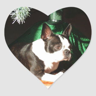 Boston Terrier Christmas with Piper Heart Sticker