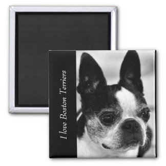 Boston Terrier Close Up Black and White Text Magnet