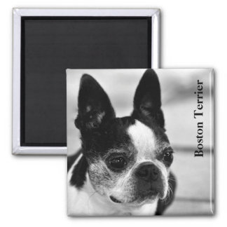 Boston Terrier Close Up Text Magnet