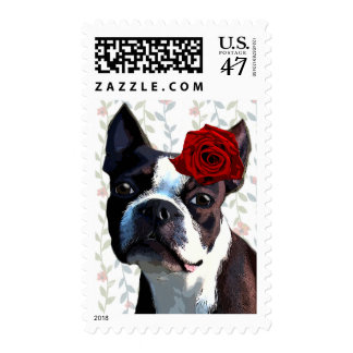 Boston Terrier con color de rosa en la cabeza 2 Sellos Postales