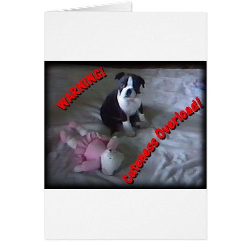 Boston Terrier:  Cuteness Overload! Card