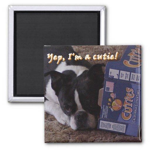 Boston Terrier:  Cutie Imanes Para Frigoríficos