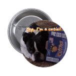 Boston Terrier:  Cutie Pins