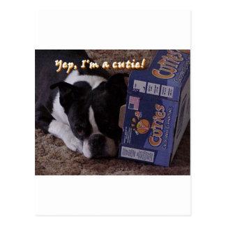 Boston Terrier:  Cutie Postcard