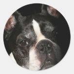 Boston Terrier:  Demasiado lindo Pegatinas Redondas
