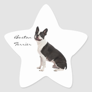 Boston Terrier dog beautiful custom stickers, gift Star Sticker