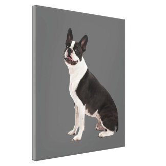 Boston Terrier dog beautiful photo canvas print