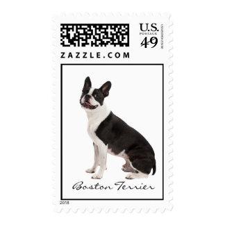 Boston Terrier dog beautiful photo, custom stamp