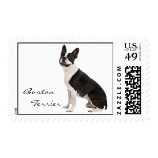 Boston Terrier dog beautiful photo, custom stamp