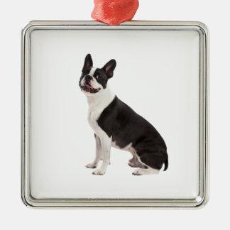 Boston Terrier dog beautiful photo ornament, gift