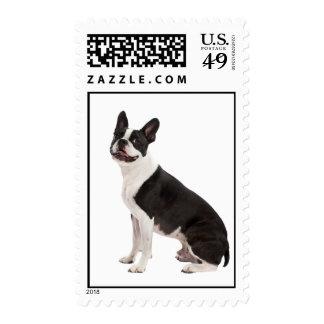 Boston Terrier dog beautiful photo, stamp
