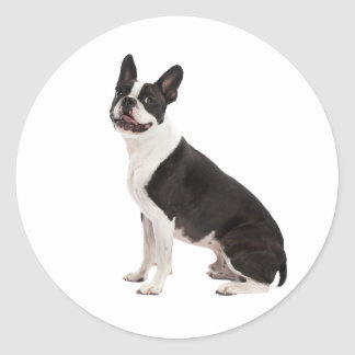 Boston Terrier dog beautiful photo stickers, gift Classic Round Sticker