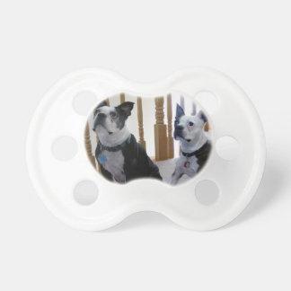Boston Terrier dog BooginHead Pacifier