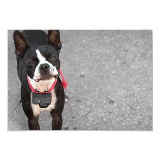 Boston Terrier Dog Card