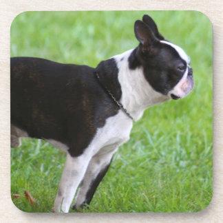 Boston Terrier dog Coaster