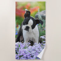 Boston Terrier Dog Cute Puppy Animal Head Photo , Beach Towel