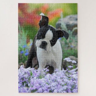 Boston Terrier Dog Cute Puppy Animal Head Photo -- Jigsaw Puzzle
