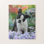 """Boston Terrier Dog Cute Puppy Game 11x14 Jigsaw Puzzle<br><div class=""""desc"""">A young cute Boston Terrier female puppy, black with white markings, in a flowery garden. Boston Terriers, also called Boston Bulls or &quot;American Gentlemen&quot;, are a gentle, friendly and intelligent dog breed for companionship. The puppy-eyed doggy was photographed by Katho Menden, this animal photo puzzle game is an enchanting gift...</div>"""