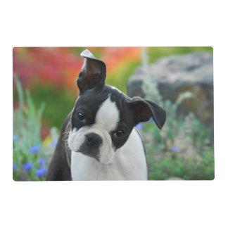 Boston Terrier Dog Cute Puppy, Gloss Mat