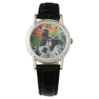 Boston Terrier Dog Cute Puppy Head -- dial-plate Watch