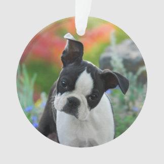 Boston Terrier Dog Cute Puppy Photo  round acrylic Ornament